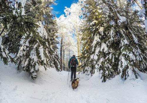 Sněžnicování se psem