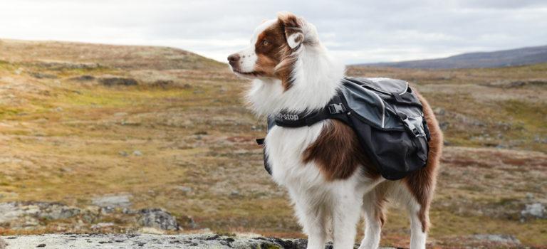 Batoh pro psa