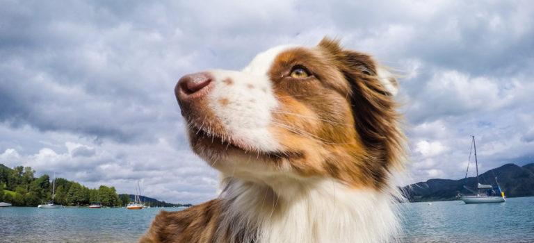 Očkování a jiné náležitosti k cestování se psem