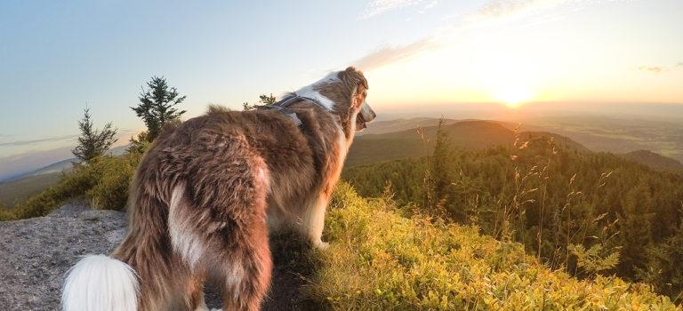6 tipů pro lepší fotky z (psích) výletů