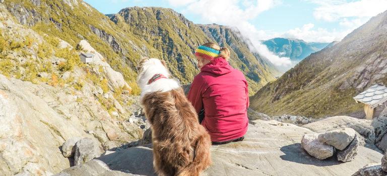 Cestovní pojištění pro psa