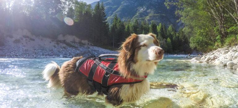 Koupání se psem – kam vyrazit v ČR?