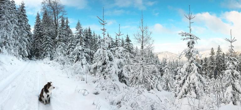 Výlety po Jizerkách v zimě