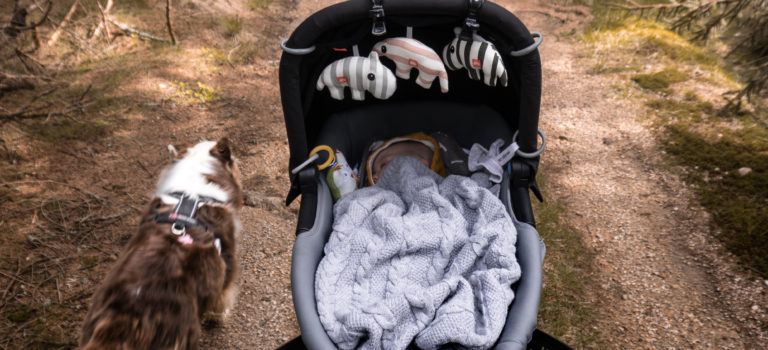 Pes a dítě – část I. – přípravy aneb 3 tipy, jak to psovi usnadnit